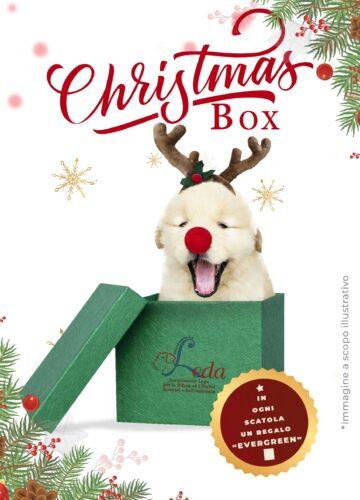 FluidoPet Christmas Box